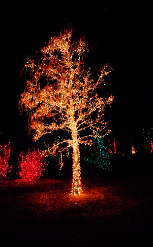 Tree_Lights_orange_01