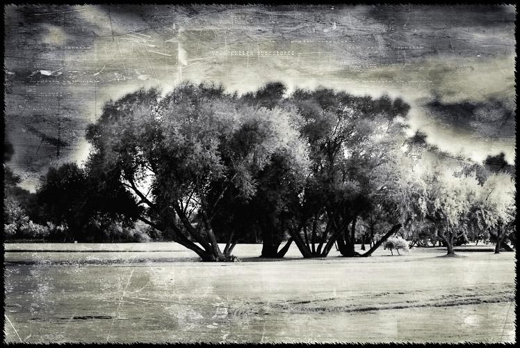 Trees_100823