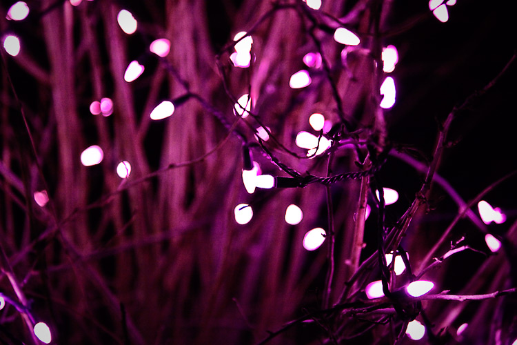 grass_lights_pink_01
