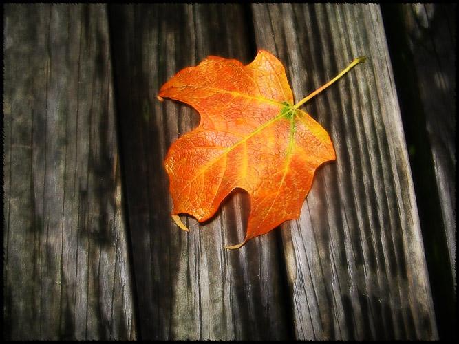 leaf_100827