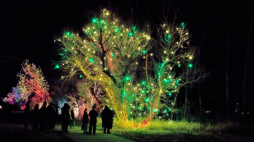 trees_lights_green_02
