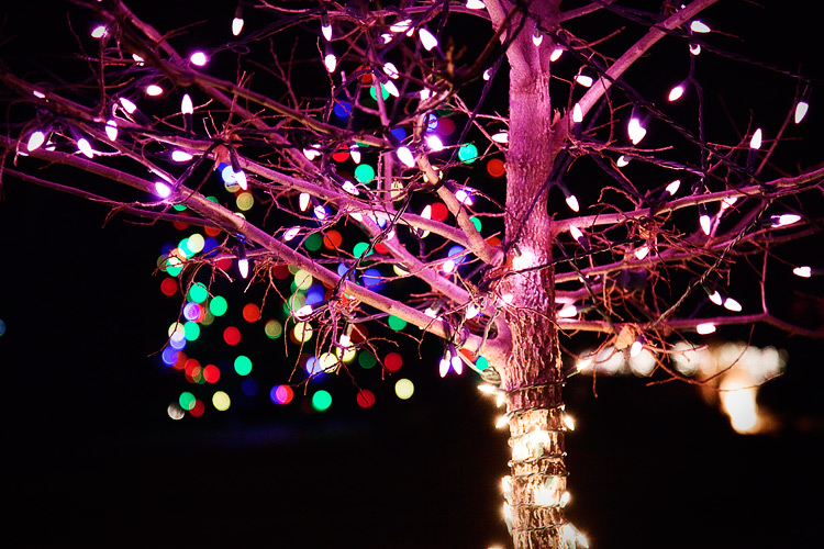 trees_lights_pink_01